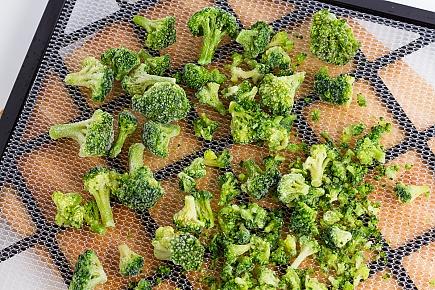 frozen broccoli spread on a dehydrator tray